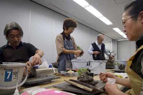 Bonsai (石付き) - alumnos