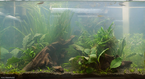 20H Aquascape