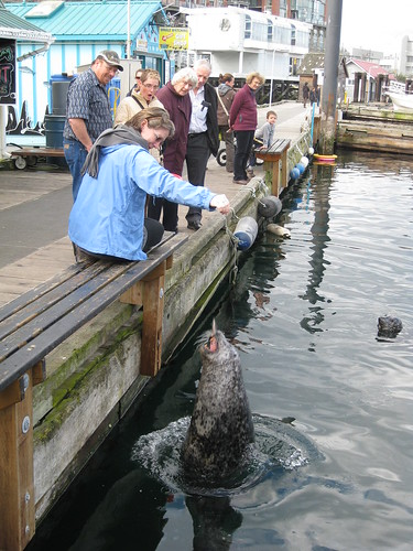 Feeding the Seals at Fisherman's Wharf