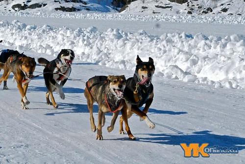 Diavik 150 Dog Race Day 3