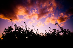 Spring is coming (KoZa_KoZa) Tags: shadow flower japan clouds spring rapeseed 菜の花