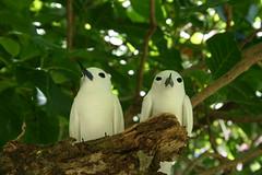 Oiseaux mignons