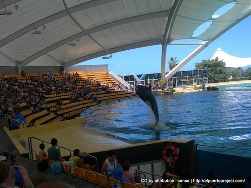 Espectáculo de las Orcas
