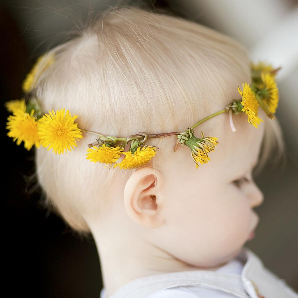 the dandelion prince.