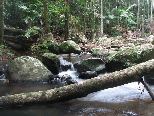 tamborine rainforest