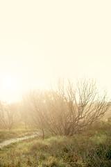 (november.rain*) Tags: nature sunshine negativespace magiclight moniqueduval