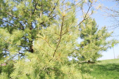 Tree Branch 02