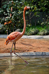 (Yiyi **) Tags: china zoo shanghai flamingoe