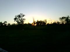 Pôr-do-Sol de Brasília por trás das árvores