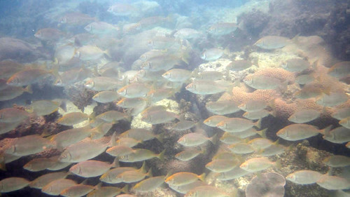 koh Samui Snorkel chaweng beach south サムイ島 チャウエンビーチ南でシュノーケル15
