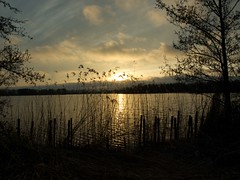 Icelandic ash sunset piccardthofplas groningen 3