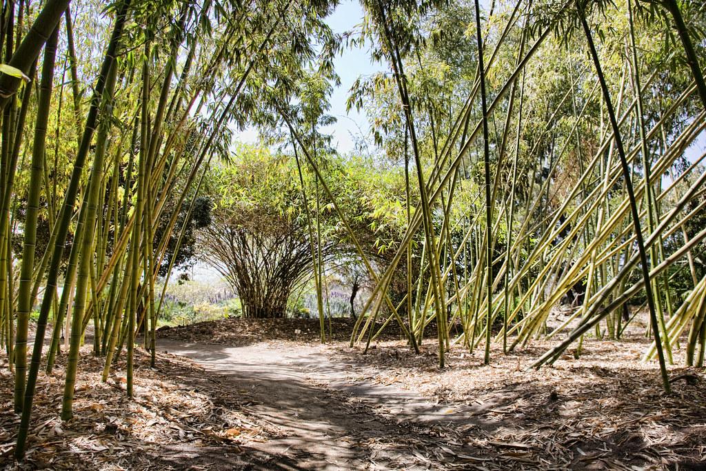 bamboo_7048