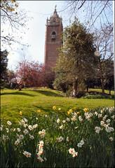 CABOT TOWER IN SPRINGTIME (MissCharity) Tags: bristol daffodills cabottower brandonhill wonderfulworldofflowers