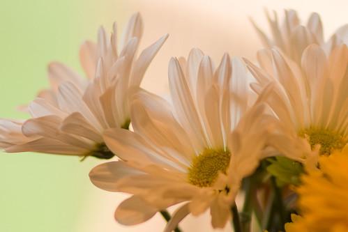 spring flowers 008-1