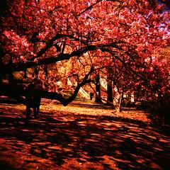 Natureza (lomocouple) Tags: nyc newyork film analog lomo xpro lomography centralpark toycamera velvia diana crossprocessing 120mm toycam cromo processocruzado