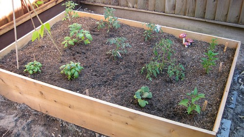 Raised Bed Ready to Grow