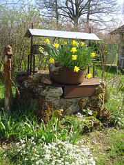 Well and daffs Les Trois Chenes Videix France (LesTroisChenes) Tags: well daffodils limousin wishingwell springgarden containerplanting chambresdhotesrochechouart bedandbreakfastlimousin