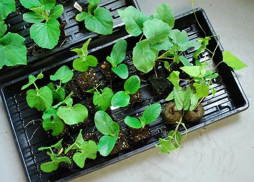 warm season plants 3