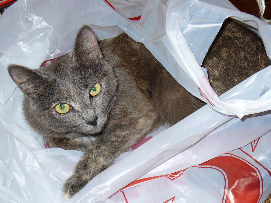 My cat Tinki