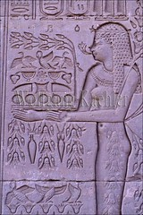 10040249 (wolfgangkaehler) Tags: africa temple ancient egypt carving temples offering hathor reliefcarving ancientsite denderaegypt