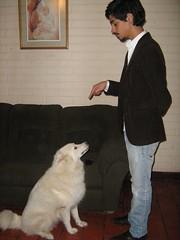 Adiestrador canino de Centralvet,  Santiago