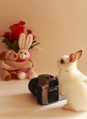 Future Photographer (^0^) ( Spice (^_^)) Tags: camera light shadow pet white flower rabbit bunny eye art feet animal japan canon studio geotagged asian photography eos spring kiss asia flickr colours photographer image small may picture ears blogger minimal livejournal tiny  vox  companion gettyimages 2010 facebook  friendster multiply stufftoys saitamaken    5            twitter minirabbit    twitpic       canoneoskissx4 mixrabbit