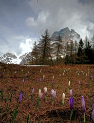 Dedicated to my Contacts - Dedicato ai miei Contatti (Robyn Hooz) Tags: flowers friends italy mountain snow spring flickr italia first dolomites dolomiti passo veneto pelmo mywinners staulanza
