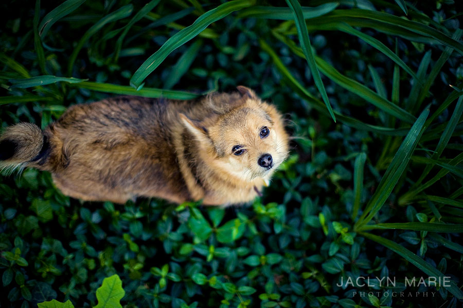 Wichita pet photography