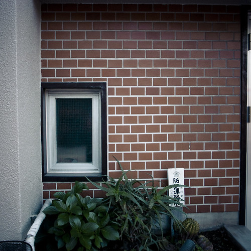 Window with Aloe and Bricks