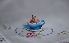 maxine calls this 'bunny tea' (JennWrenn) Tags: bunny tiny handkerchief rement embroidered cupandsaucer