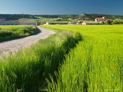El te guiar hasta all (anpegom) Tags: espaa azul spain y camino valle valladolid len castilla cebada esgueva olmosdeesgueva verdeolympus