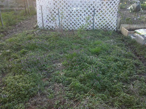 Garden plot, April 1