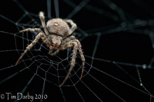 2010-05-22 - Spider-79