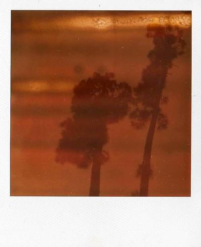 Trees-- Orlando, FL
