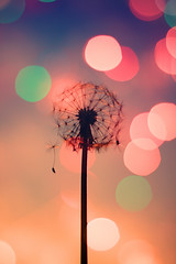 TIME FLIES.....................* (Neal.) Tags: pink blue red green clock rock canon sock time bokeh lock dandelion spock frock tick tock knock wok hock dandelionseeds focuspocus niffty clanflickr dwcffbokeh