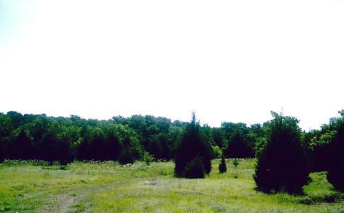trinity trail, near St. Paul texas, south of collin park