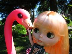 Hello, flamingo.