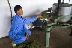 Tea Factory, by Andy (Portrait of an LBX) Tags: china factory tea 中国 yunnan teafactory byandy 中國 云南 雲南 茶廠