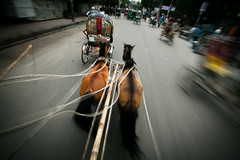 A traveller from past [..Dhaka, Bangladesh..] (Catch the dream) Tags: road street horse motion highway pair traditional run bamboo motionblur whip pitch dhaka ropes cart rickshaw rider bangladesh lash horsecart whiplash olddhaka runninghorses traditionalride gettyimagesbangladeshq2