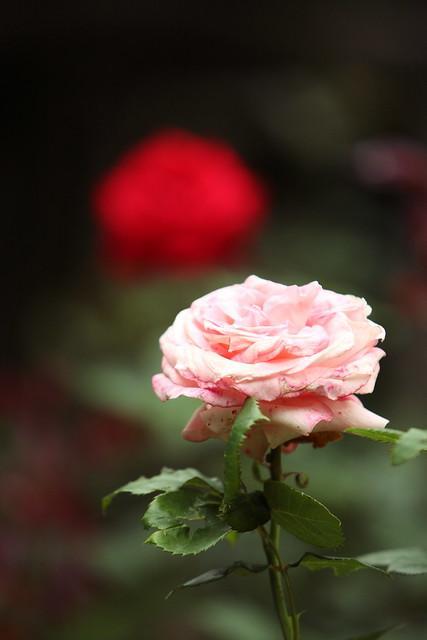 静寂の花々