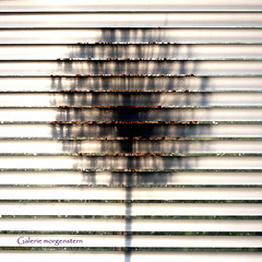 shadow of the day (galerie morgenstern) Tags: morninglight shadows shadowoftheday galeriemorgenstern