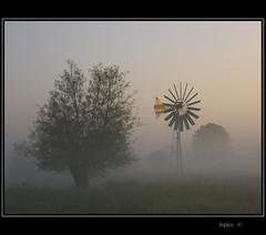 Summer Mist.