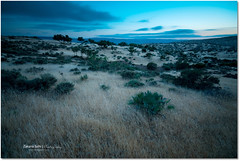 Argan Trees (Zakaria Salhi) Tags: sky tree green clouds landscape nikon cloudy sigma bleu morocco maroc 1020 essaouira d300 argan zakariasalhi