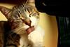 I'ts shower time! (ilziiite) Tags: italy home animals tongue cat canon shower washing cicciobello