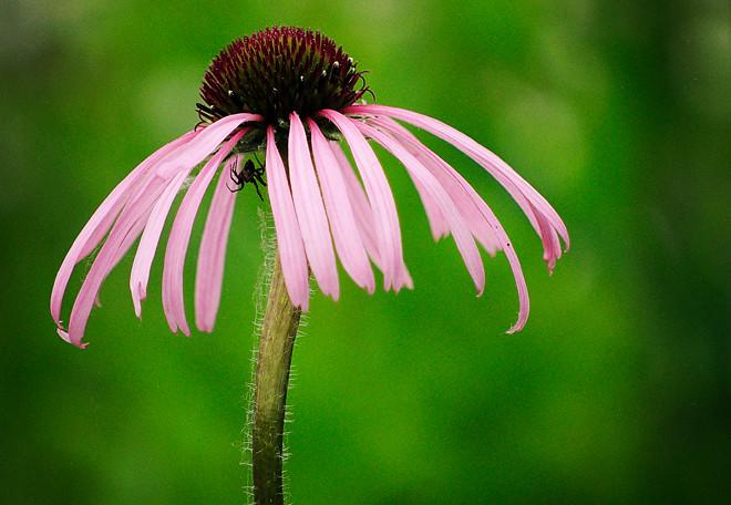 Flowery shelter