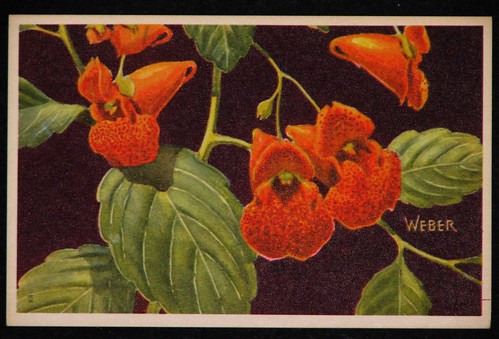 postcards - june 011