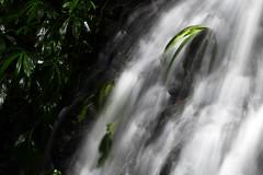 Ferns (Jesse4870) Tags: park light fern tree green water rain gold coast waterfall log rainforest flood south twin australia falls east erosion boulders national queensland lots everywhere springbrook