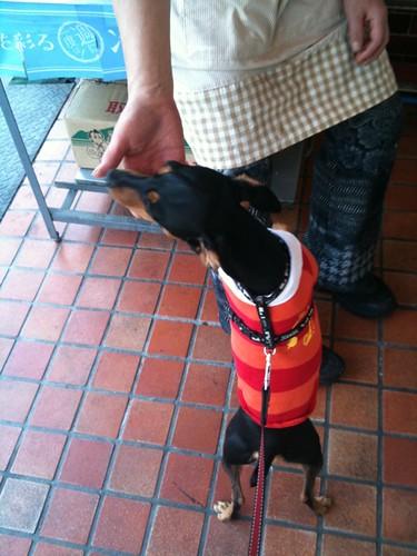芸術の秋、黒犬は食欲の秋。お肉屋さんでおねだり。