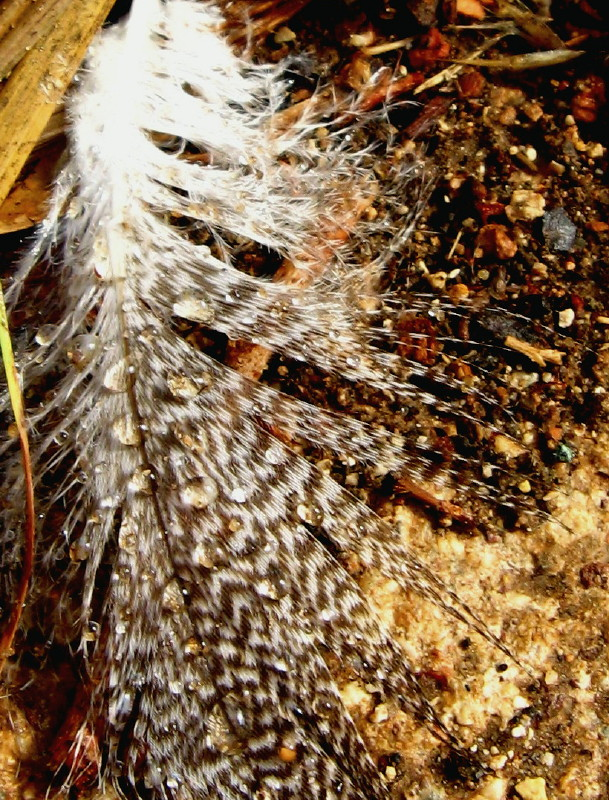 30-10-2010-wet-feather