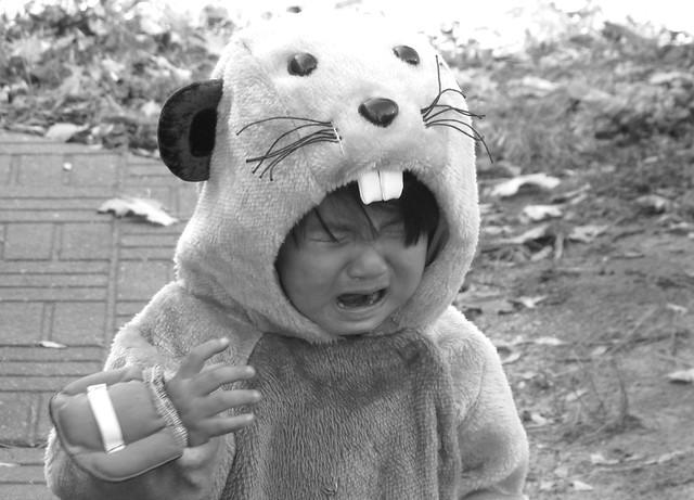 beaver cries
